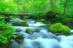 Vattenvår i skog Arkivfoton
