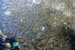 vattenyttersida i dammet Arkivfoto