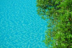 Vattenyttersida med gröna sidor runt om simbassäng arkivbild