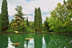 Vattnet av ett damm reflekterar cypresses arkivbild