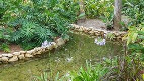 Vattnig trädgård Arkivfoton