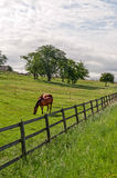 Vaud (Switzerland) - Horses Royalty Free Stock Photography