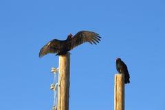 Vaulter drogende vleugels op de post Stock Fotografie