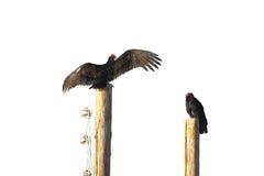 Vaulter drogende vleugels op de post Royalty-vrije Stock Fotografie