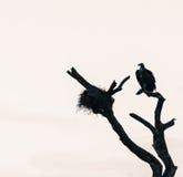 Vautour et nid dans un arbre nu image stock