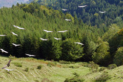 Vautours dans la montagne Images libres de droits