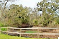 Vautours sur un arbre au-dessus d'une rivière Images stock