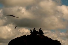 Vautours sur une grande roche avec le ciel nuageux Photo stock