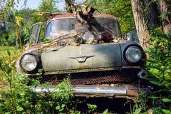 1960 Vauxhall Victor. Abandoned 1960 Vauxhall Victor near Mackinaw Illinois stock image