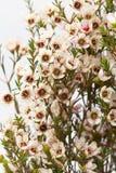 Vaxa blomman Arkivfoton