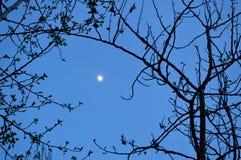 Vaxa gibbous måne 2 Royaltyfri Foto