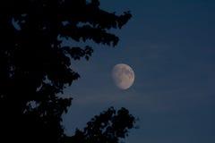 Vaxa månen till och med asp- träd Royaltyfri Fotografi