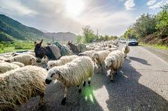Vayk, Armenia - May 10, 2017. Sheep blocking cars on road in sunset. Vayk, Armenia - May 10, 2017. Sheep and donkey blocking cars on road in sunset. Asia royalty free stock photos
