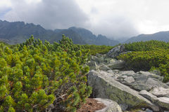 Vazecka dolina in High Tatras Stock Photo