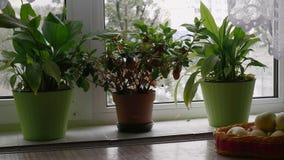 Vazen met bloementribune op de vensterbank stock video