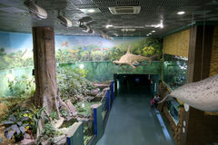 VDNKh Moskvarium - the biggest in Europe sea aquarium and entertainment center, Moscow, Russia Stock Photography