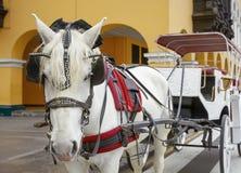 Veículo puxado por cavalos tradicional em Lima, Peru Um branco bonito foto de stock royalty free