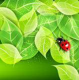 Ve Background With Leaves And Ladybug Royalty Free Stock Photography