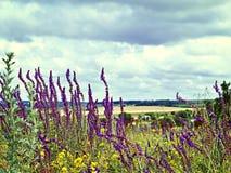 Vea el cielo a través de la hierba verde con las flores rosadas Imagen de archivo