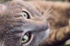 Vea el gato Fotografía de archivo libre de regalías