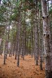 Vea el interior del bosque en los árboles Fotos de archivo