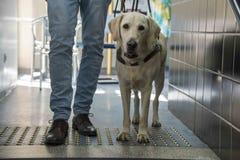 Vea el perro del ojo Foto de archivo libre de regalías