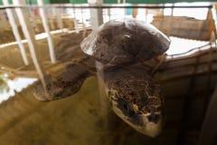 Vea la tortuga Imágenes de archivo libres de regalías