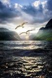 Vea las gaviotas en un fiordo foto de archivo libre de regalías