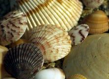 Vea los shelles en la playa Imágenes de archivo libres de regalías