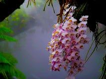 Vea por favor las flores muy hermosas imágenes de archivo libres de regalías