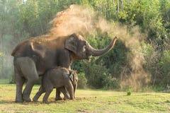 Veau d'éléphant Photo stock