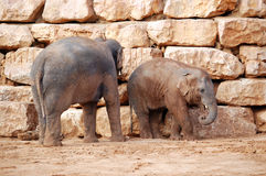 Veau d'éléphant asiatique et sa mère Photographie stock libre de droits