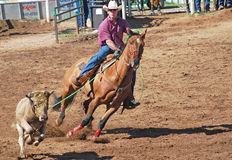 Veau Roping de cowboy Images stock