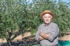 Vecchi agricoltore ed olive per olio Fotografia Stock
