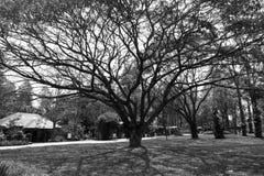 Vecchi alberi Immagini Stock
