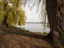 Vecchi alberi al binnenalster, Amburgo, Germania Fotografie Stock Libere da Diritti
