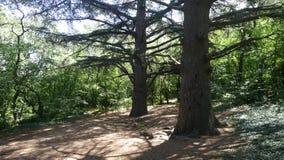 Vecchi alberi con i rami senza foglie fotografia stock