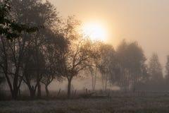 Vecchi alberi del giardino nella mattina nebbiosa Immagini Stock Libere da Diritti