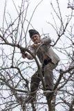 Vecchi alberi della guarnizione dell'agricoltore nel suo frutteto Fotografia Stock Libera da Diritti