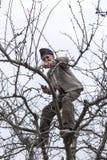 Vecchi alberi della guarnizione dell'agricoltore nel suo frutteto dentro Fotografie Stock Libere da Diritti