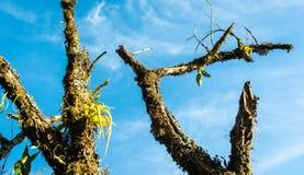 Vecchi alberi di stagione invernale Immagine Stock Libera da Diritti