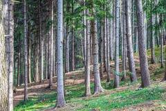 Vecchi alberi nel legno immagini stock libere da diritti