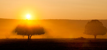 Vecchi alberi nella luminosità di alba fotografie stock