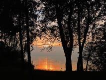 Vecchi alberi vicino allo sputo di Curonian, Lituania Immagini Stock