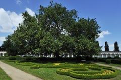 Vecchi albero & colonnato Immagini Stock