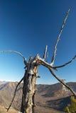 Vecchi albero, cielo blu e montagne. Immagini Stock