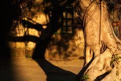 Vecchi albero e Camera Fotografia Stock