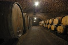 Vecchi barilotti in una caverna del vino Immagine Stock