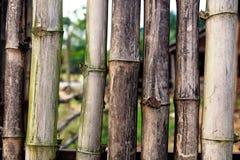 Vecchi bastoni di bambù Fotografie Stock Libere da Diritti