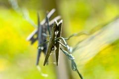 Vecchi clothespins Immagine Stock